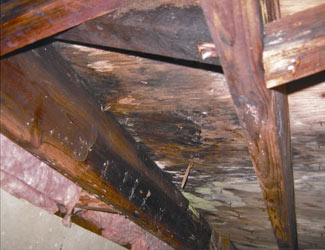 mold and rot in a Wilmington crawl space
