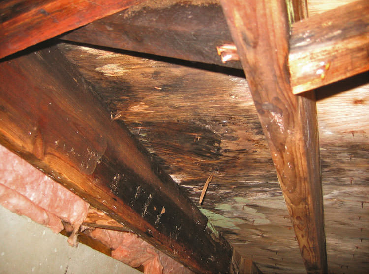 Crawl Space Mold Rot Control With A Crawl Space Vapor
