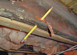 Destroyed crawl space structural wood in Leland