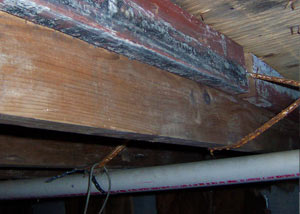 Rotting, decaying wood from mold damage in Morehead City